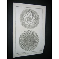 starfish. Jellyfish.