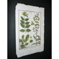 Histoire Naturelle, Botanique.