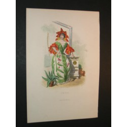 Les Fleurs Animées: Cactus