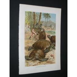 Hunting turtle