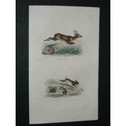Roe deer, Hare and Rabbit