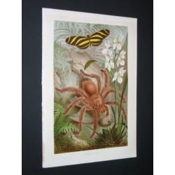 Araignée, papillon