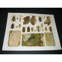 Insectes