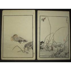 Japanese woodblock print. Bird