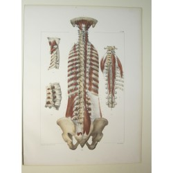 Anatomy from c.1850